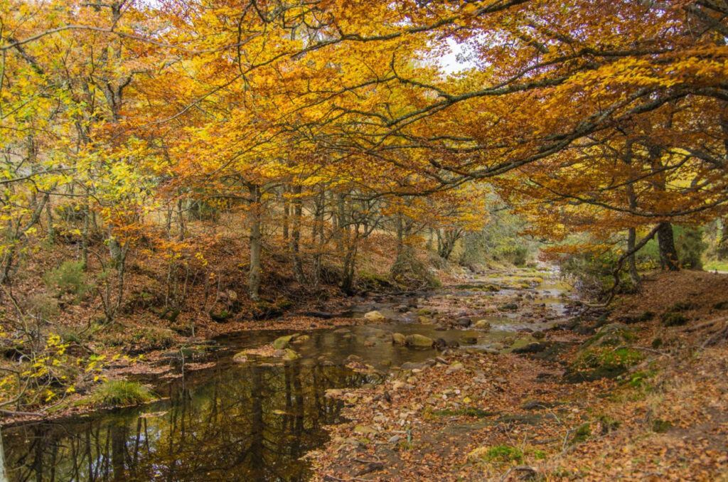Hayedo de Montejo - Sierra del Rincon - Madrid